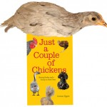 Red Cornish Chick on Book