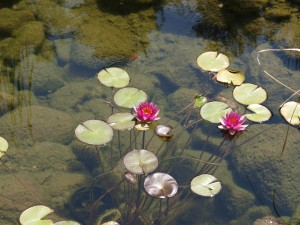 The Lilypond of Self Publishing Advice