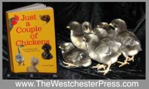 How To Raise Chickens and Introduce New Chicks