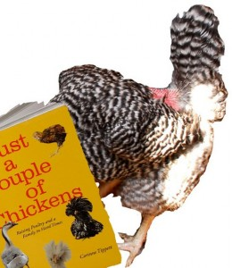 Just A Couple Of Chickens by Corinne Tippett and fugly chooks