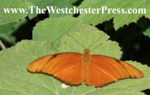 Self Publishing Butterflies Buy Their Own ISBNs